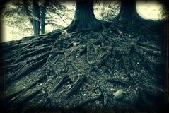 Holga roots Stock Image