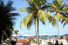 Holguin, Cuba, 11 25 2018 palmen op het strand stock afbeeldingen
