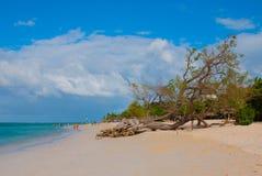 Holguin, plage de Guardalavaca, Cuba : Mer des Caraïbes avec la belle eau bleue, le sable et un arbre tombé Beau paysage Images libres de droits
