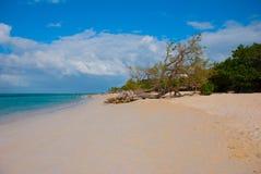 Holguin, plage de Guardalavaca, Cuba : Mer des Caraïbes avec la belle eau bleue, le sable et un arbre tombé Beau paysage Image libre de droits