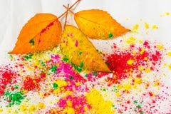 Holi Powder with autumn foliage Royalty Free Stock Image