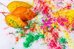 Holi Powder with autumn foliage Royalty Free Stock Images