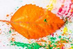 Holi Powder with autumn leaf Royalty Free Stock Images