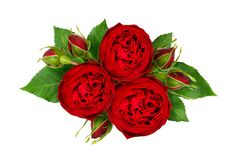 Holiday arrangement with red rose flowers and buds. Isolated on white background. Flat lay. Top view Royalty Free Stock Photography