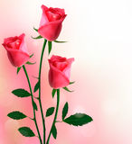 Holiday background with beautiful red roses Stock Image