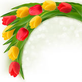 Holiday background with bouquet of colorful flowers. Royalty Free Stock Image