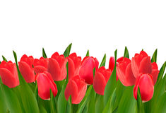 Holiday background with bouquet of red flowers. Royalty Free Stock Photos
