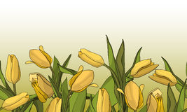 Holiday background with bouquet of yellow tulips. Seamless border background Stock Image