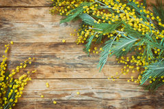 Holiday background with branches of mimosa Royalty Free Stock Photography
