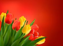Holiday background with colorful flowers. Stock Photos