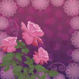 Holiday background with flower rose Royalty Free Stock Photos