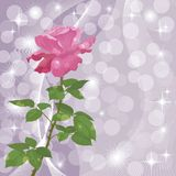 Holiday background with flower rose Royalty Free Stock Images