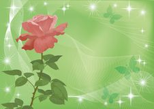 Holiday background with flower rose Royalty Free Stock Image