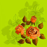Holiday Background with Flower Rose Royalty Free Stock Photography