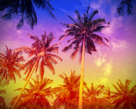 Holiday background made of palm trees silhouettes at sunset.  Stock Images