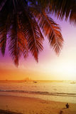 Holiday background made of palm trees silhouettes. Royalty Free Stock Photos