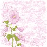 Holiday background with mallow flowers Royalty Free Stock Image