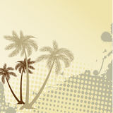 Holiday background with palms Royalty Free Stock Images