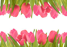 Holiday background with pink beautiful flowers. Stock Image