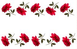 Holiday background with red beautiful roses. Royalty Free Stock Image