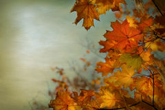 Holiday Background - Thanksgiving Royalty Free Stock Image