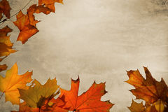 Holiday Background - Thanksgiving Stock Photography