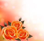Holiday background with three beautiful flowers. Royalty Free Stock Photo