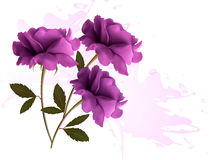 Holiday background with three beautiful flowers. Vector Stock Photo