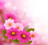 Holiday background with three pink flowers. Stock Images
