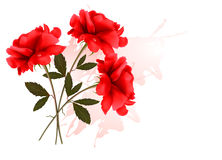 Holiday Background With Three Red Roses. Royalty Free Stock Photography