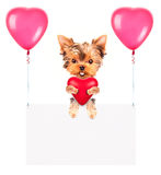Holiday banners with balloons and dog Royalty Free Stock Photography