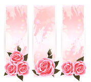 Holiday banners with pink beautiful roses. Stock Photos