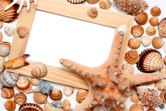 Holiday beach concept with shells Royalty Free Stock Images