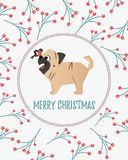 Holiday card with twigs and berries ornament and funny pug Stock Images
