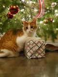 Holiday cat under the tree royalty free stock image