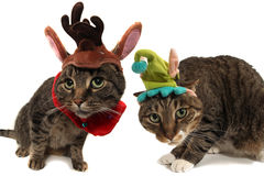 Holiday cats. Two cats dressed in holiday hats Royalty Free Stock Image