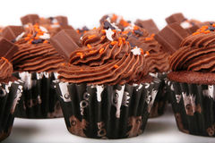 Holiday Chocolate Cupcakes Royalty Free Stock Photo