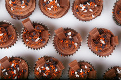 Holiday Chocolate Cupcakes Royalty Free Stock Image
