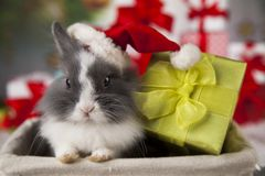 Christmas bunny, santa baby red hat. Holiday Christmas bunny in Santa hat on gift box background Stock Images