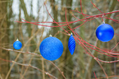 Holiday Christmas decorations with glitter blue bauble ornaments hanging on tree red branches Royalty Free Stock Photography