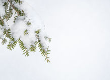 Holiday Christmas Greeting Card Tree Snow Stock Images