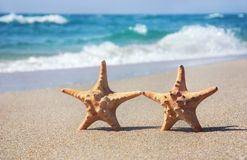 Holiday concept - two sea-stars walking on sand beach against wa Royalty Free Stock Photos