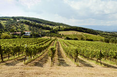 Holiday in the countryside on the hills vineyards of pallagrello Royalty Free Stock Photo