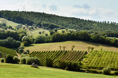 Holiday in the countryside on the hills, visiting the vineyards of pallagrello, typical and valuable wine produced in. The province of Caserta in Campania royalty free stock image