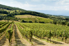 Holiday in the countryside on the hills vineyards of pallagrello Royalty Free Stock Photography