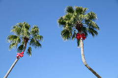 Holiday Decorated Palm Trees Royalty Free Stock Photography