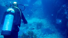 One scuba diver in blue water royalty free stock photo