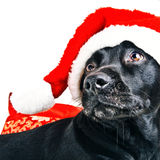Holiday dog. Isolated on white Royalty Free Stock Images