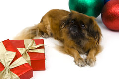 Holiday dog Royalty Free Stock Images