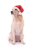 Holiday dog Stock Photos